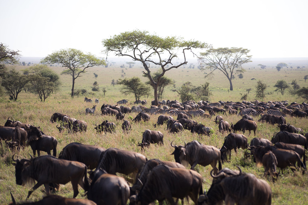 Booking Budget Safaris in Africa